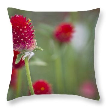Bachelor's Button Throw Pillow by Lisa Plymell
