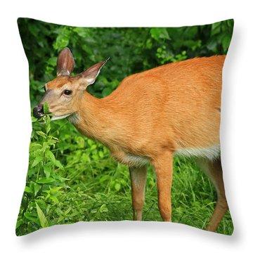 Backyard Dining Throw Pillow by Karol Livote