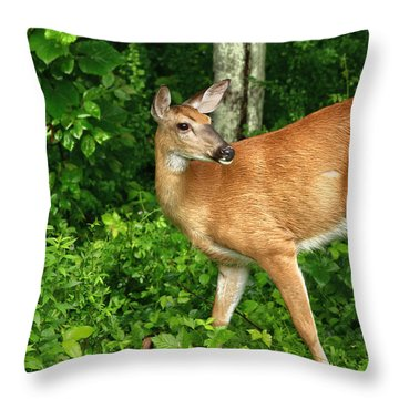 Backyard Doe Throw Pillow by Karol Livote