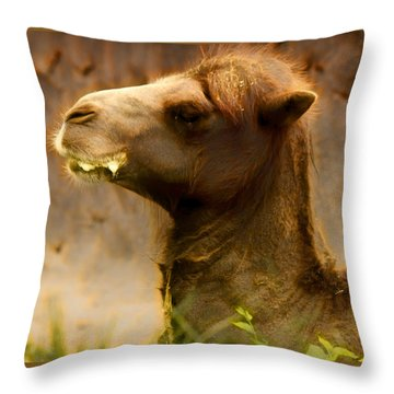 Bactrian Camel Throw Pillow