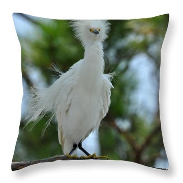 Bad Hair Day Throw Pillow by Rick Frost