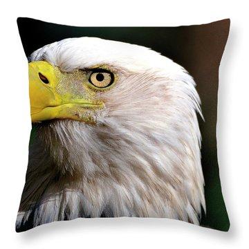 Bald Eagle Close Up Throw Pillow