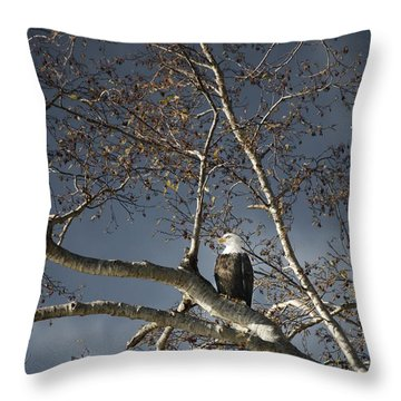 Bald Eagle In A Tree Throw Pillow by Con Tanasiuk