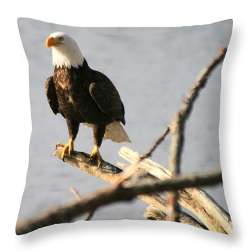 Bald Eagle On Driftwood Throw Pillow by Kym Backland
