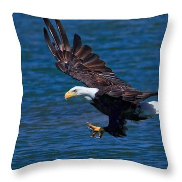 Bald Eagle On The Hunt Throw Pillow by Beth Sargent