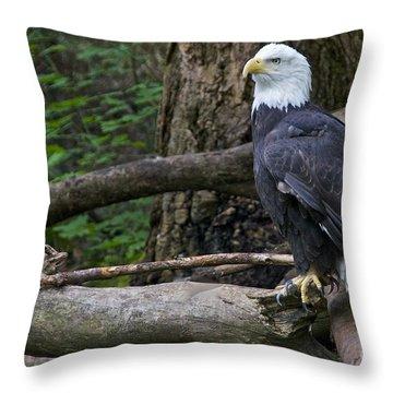 Bald Eagle Throw Pillow by Sean Griffin
