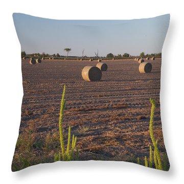 Bales In Peanut Field 12 Throw Pillow by Douglas Barnett
