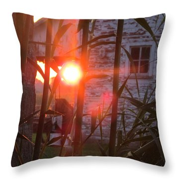 Throw Pillow featuring the photograph Bamboo Sunrise by Tina M Wenger