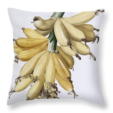 Banana Throw Pillow by Pierre Joseph Redoute