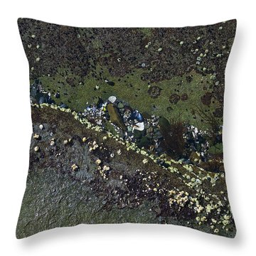 Barnacles And Seaweed Throw Pillow
