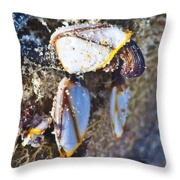 Barnacles Throw Pillows