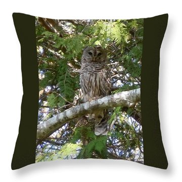 Barred Owl  Throw Pillow by Francine Frank