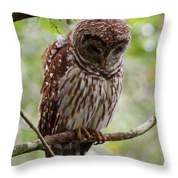 Barred Owl Throw Pillow by Joe Elliott