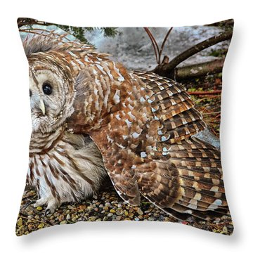 Barred Owl Warning Throw Pillow