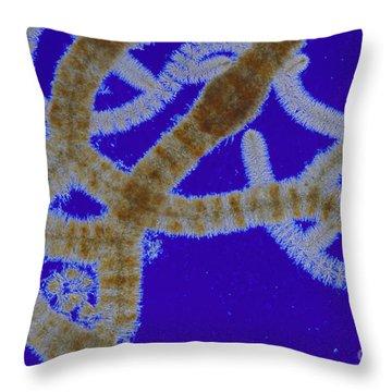 Batrachospermum Sp Algae Lm Throw Pillow by M I Walker