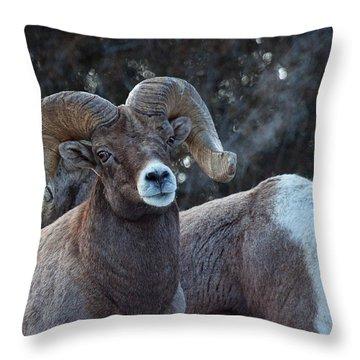 Battle Weary Throw Pillow by Jim Garrison