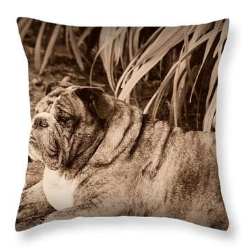 Throw Pillow featuring the photograph Baydie by Jeanette C Landstrom