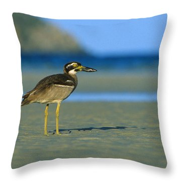 Beach Stone-curlew Throw Pillow by Bruce J Robinson