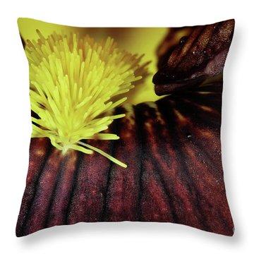 Bearded Iris Throw Pillow by Stephanie Frey