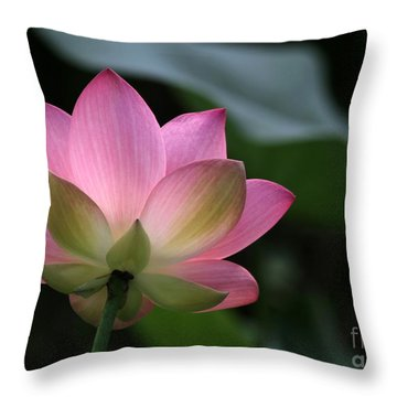Beautiful Backlit Lotus Throw Pillow by Sabrina L Ryan