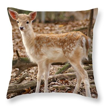 Throw Pillow featuring the photograph Beautiful Fawn by Jean Haynes