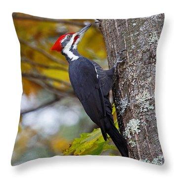 Beautiful Pileated Woodpecker Throw Pillow