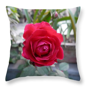 Beautiful Red Rose In A Small Garden Throw Pillow by Ashish Agarwal
