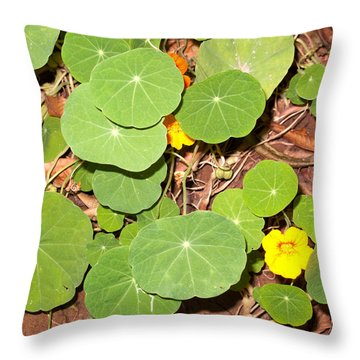Beautiful Round Green Leaves Of A Plant With Orange Flowers Throw Pillow by Ashish Agarwal