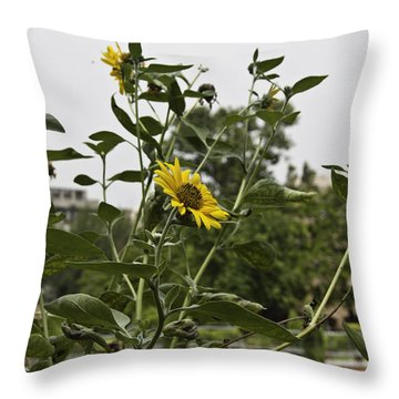 Throw Pillow featuring the photograph Beautiful Yellow Flower In A Garden by Ashish Agarwal
