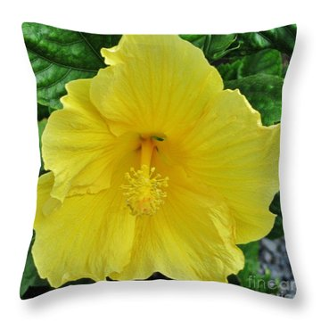 Beauty By The Frame Full Throw Pillow by Craig Wood