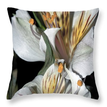 Throw Pillow featuring the photograph Beauty Untold by Tikvah's Hope