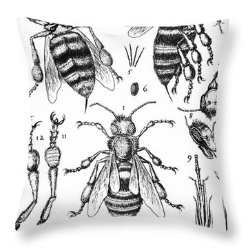 Bee Anatomy Historical Illustration Throw Pillow by SPL and Photo Researchers