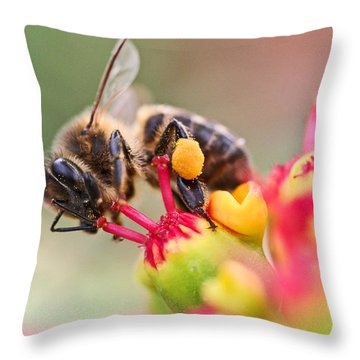 Bee At Work Throw Pillow by Ralf Kaiser