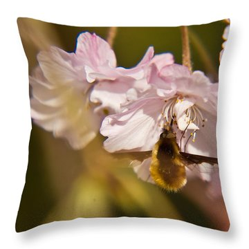 Bee Fly Feeding 1 Throw Pillow by Douglas Barnett