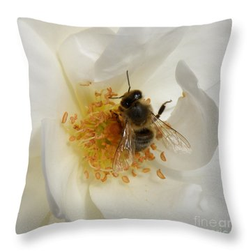 Bee In A White Rose Throw Pillow by Lainie Wrightson