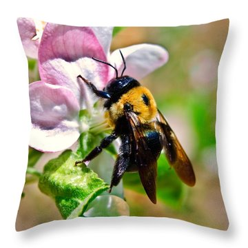 Throw Pillow featuring the photograph Bee On An Apple Blossom by Susan Leggett
