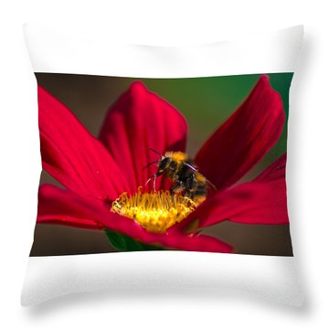 Throw Pillow featuring the photograph Beebot by Stwayne Keubrick