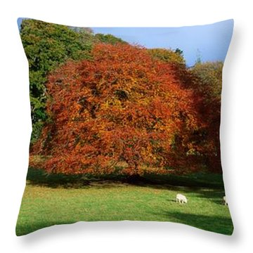 Beech Tree, Glendalough, Co Wicklow Throw Pillow by The Irish Image Collection