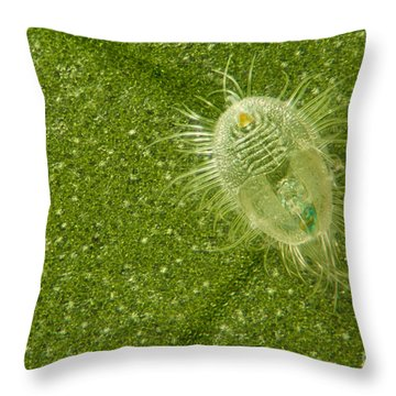 Beetle Larvae On Leaf Throw Pillow by Raul Gonzalez Perez