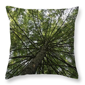 Throw Pillow featuring the photograph Beneath Tree by Jerry Bunger