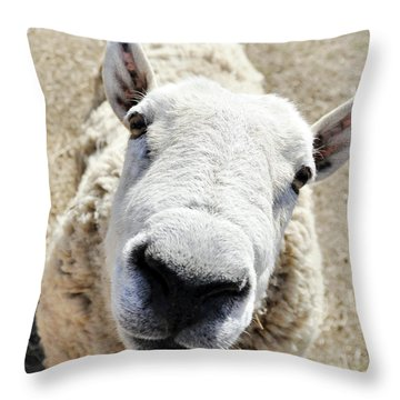 Benny The Sheep Throw Pillow