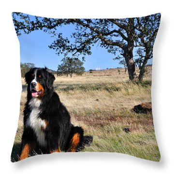 Bernese Mountain Dog In California Chaparral Throw Pillow