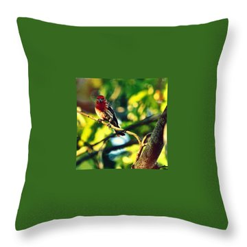 Finch Throw Pillows