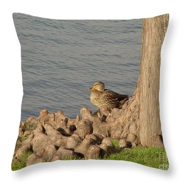 Throw Pillow featuring the photograph Bethany Lakes Duck by Jerry Bunger