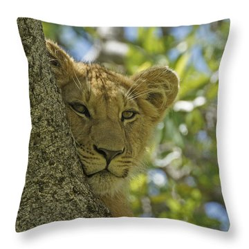 Biding My Time Throw Pillow by Michele Burgess