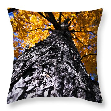 Big Autumn Tree In Fall Park Throw Pillow by Elena Elisseeva