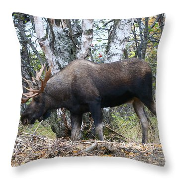 Throw Pillow featuring the photograph Big Body by Doug Lloyd