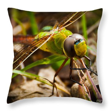 Throw Pillow featuring the photograph Big Brown Eyes by Cheryl Baxter