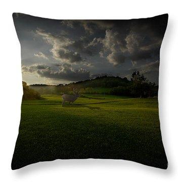 Big Buck In Field At Sunset Throw Pillow by Dan Friend