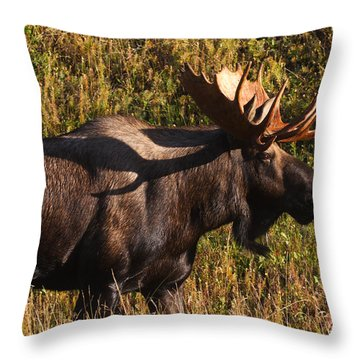 Throw Pillow featuring the photograph Big Bull by Doug Lloyd